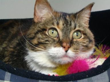 Watertown Veterinary Clinic - Watertown, MN - Crayola the Cat